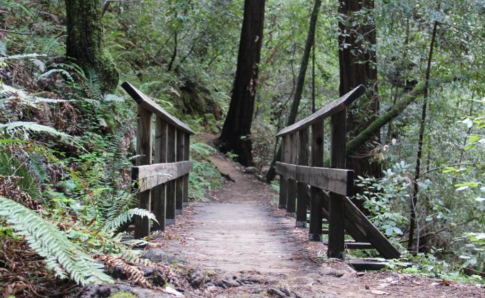 Building a Trail